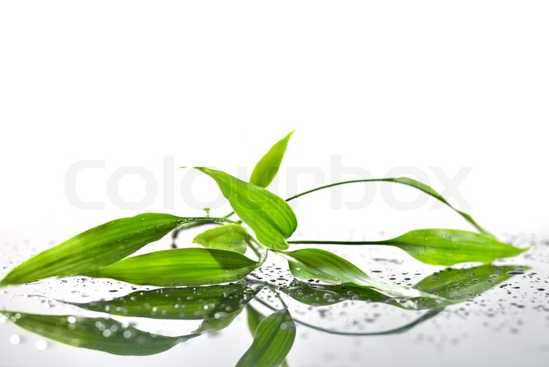 spa background with bamboo and water stock photo colourbox