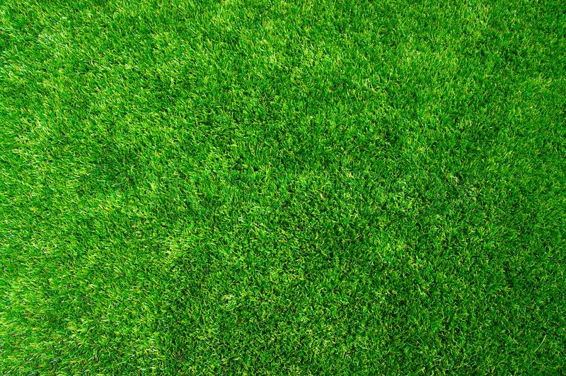 Texture Green Lawn Stock Photo Colourbox
