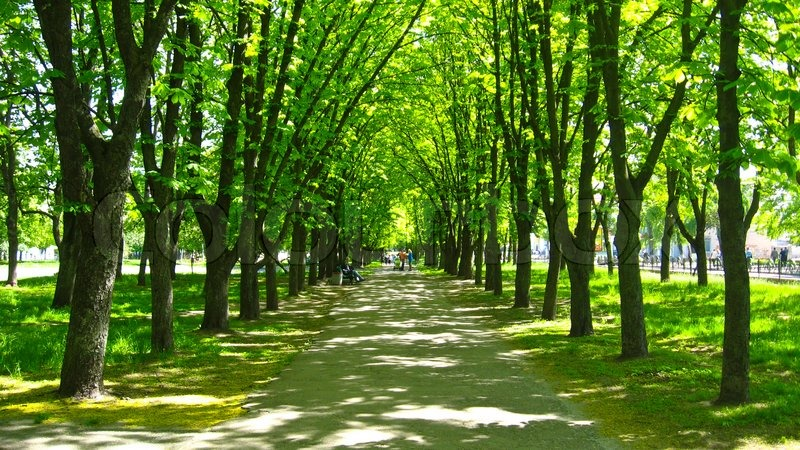 Beautiful park with many green trees | Stock Photo | Colourbox