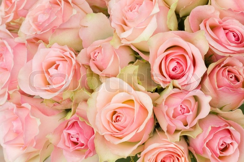 strau rosa rosen stockfoto colourbox. Black Bedroom Furniture Sets. Home Design Ideas