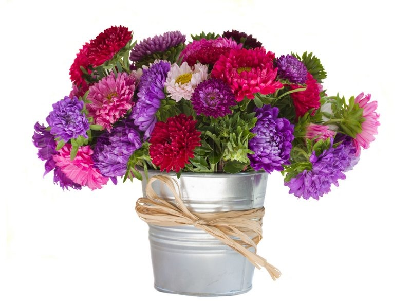 Bouquet of aster flowers in vase | Stock Photo | Colourbox