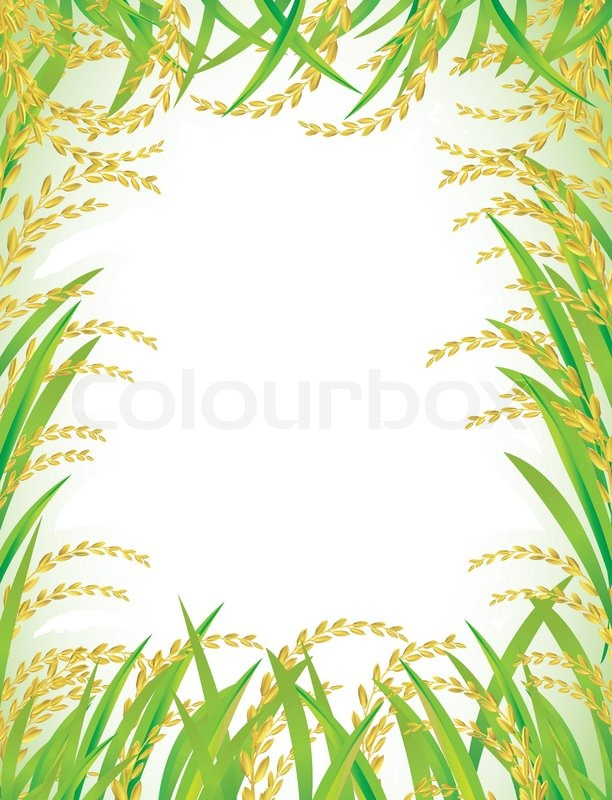 Frame And Background Of Thai White Rice Stock Vector