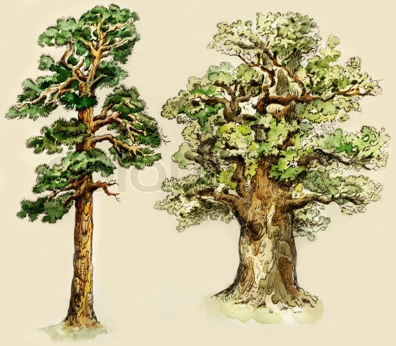 Pine And Oak Trees Painted In Vintage Manner Isolated On Buff Background