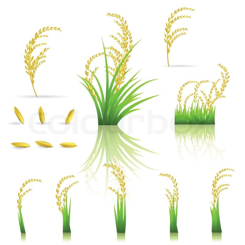 rice thai thailand white stock vector colourbox rice thai thailand white