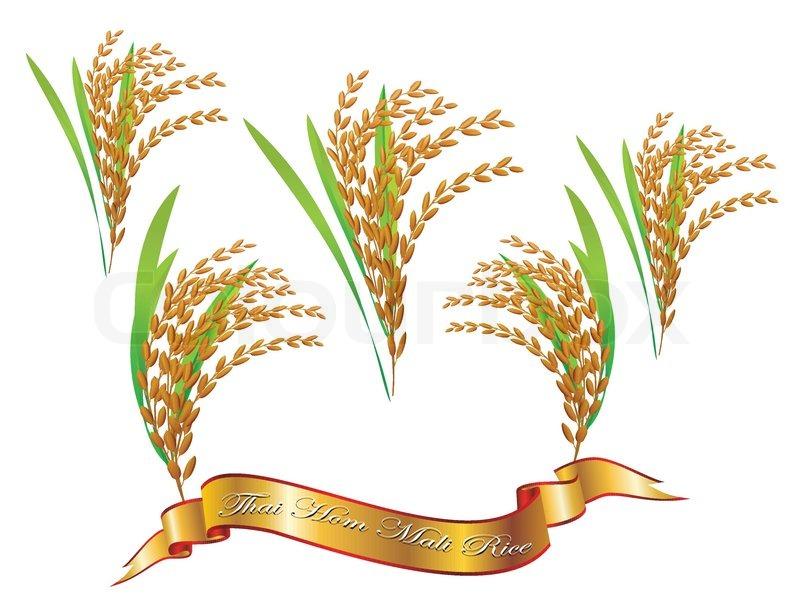 Isolated Vector Thai White Rice Stock Vector Colourbox