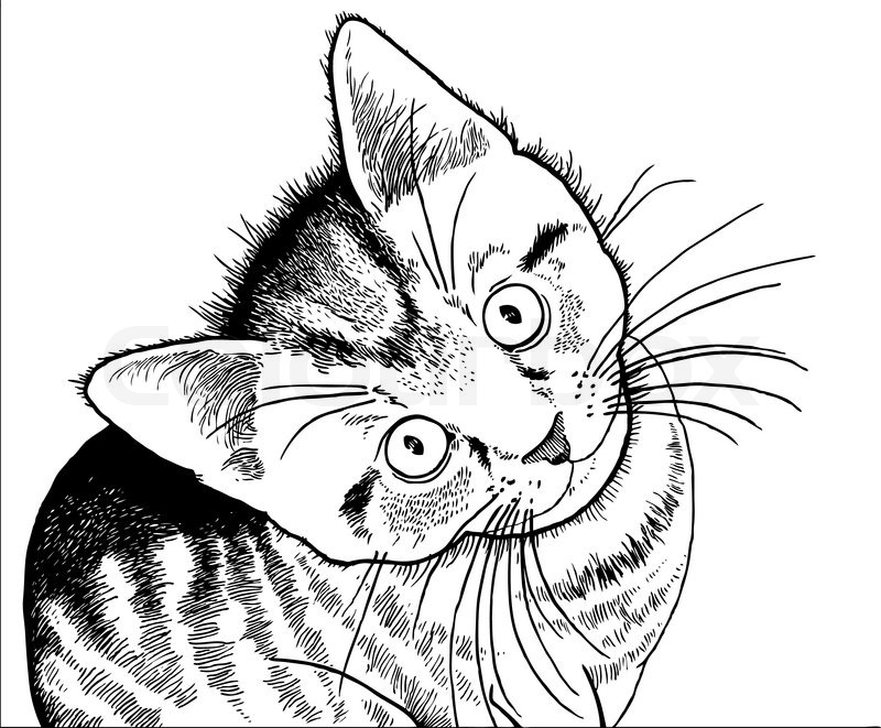 Realistic Drawing Of A Kitten