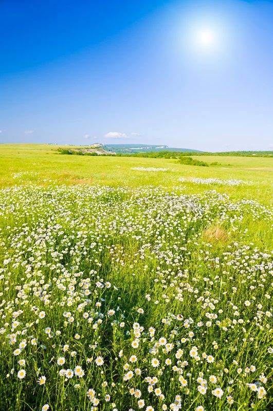 Big Field Of Flowers On Sunrise