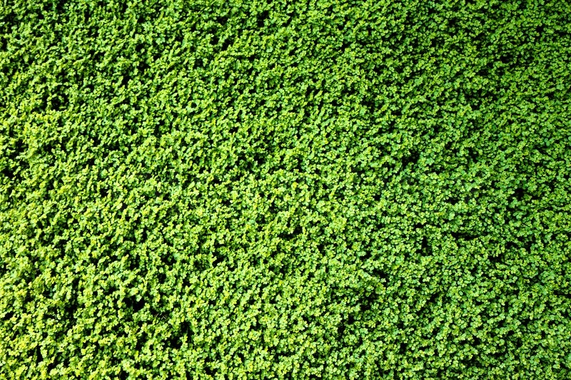 Green plants background | Stock Photo