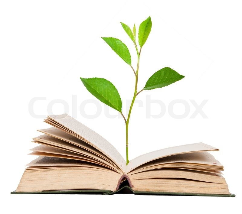 Green Sprout Growing From Open Book  Stock Photo Colourbox