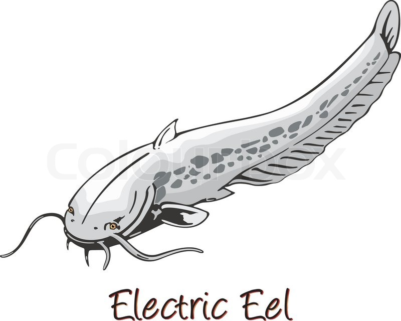 Electric Eel Color Illustration Stock Vector Colourbox