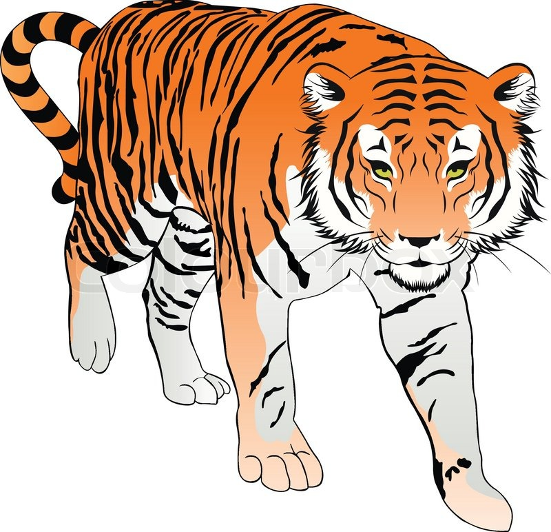 Tiger Illustration Stock Vector Colourbox