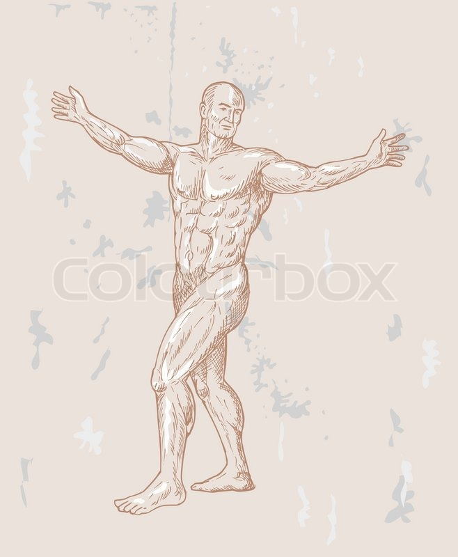 Male human anatomy drawing | Stock Vector | Colourbox