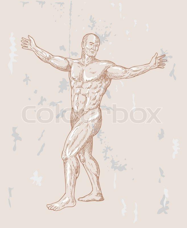 Männliche menschliche Anatomie, Zeichnung | Vektorgrafik | Colourbox