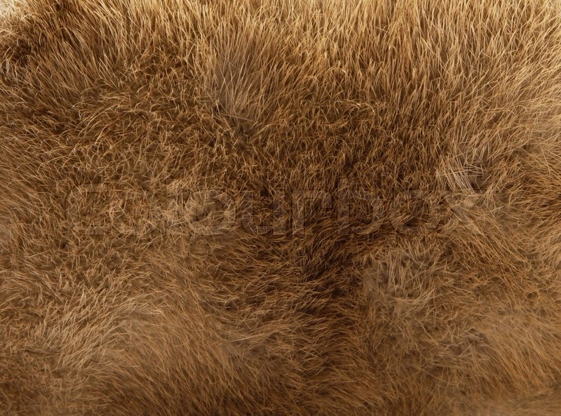 Brown Fur Texture Stock Photo Colourbox