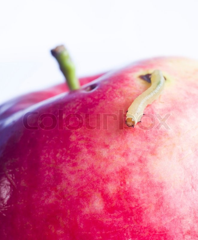 Apple Worm Car Worm Move Onred Apple