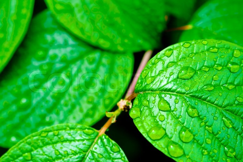 green bright leaves with rain drops nature backgrounds