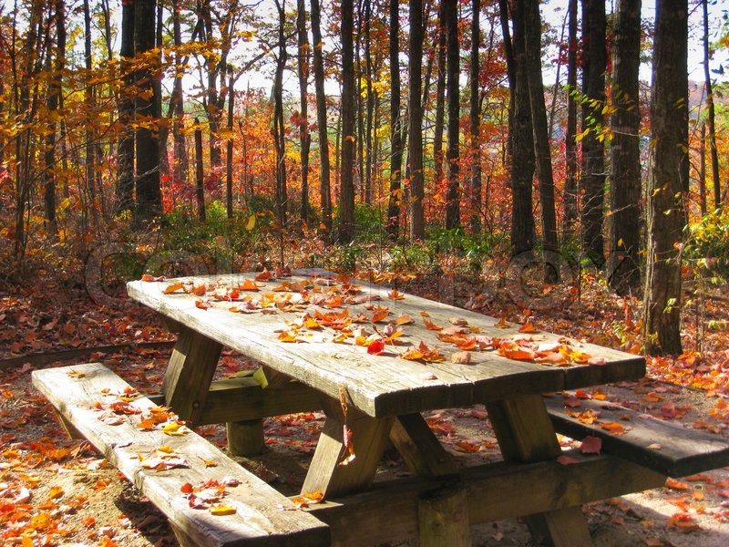 Picnic Table In Autumn Forest Stock Photo Colourbox