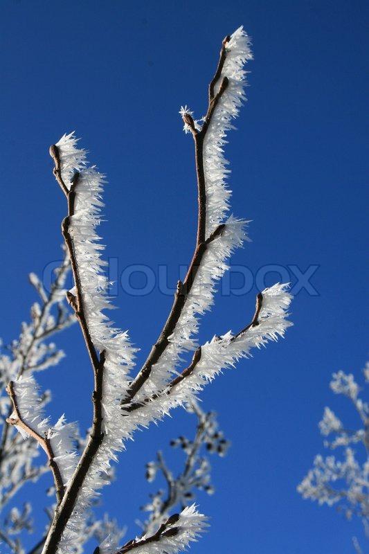 White frost, stock photo