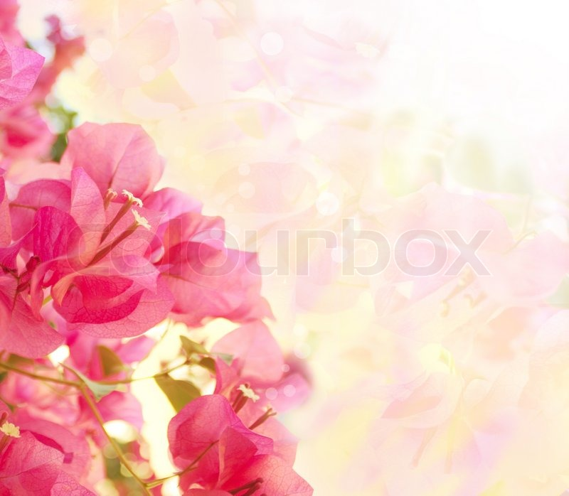 Beautiful abstract floral background with pink flowers ...