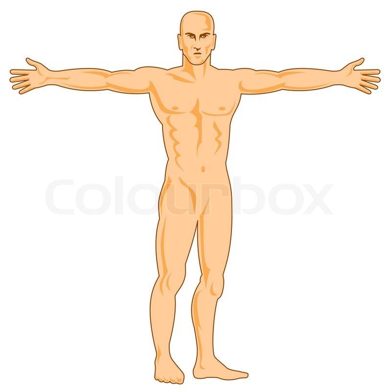 Male Human Anatomy Standing Stock Photo Colourbox