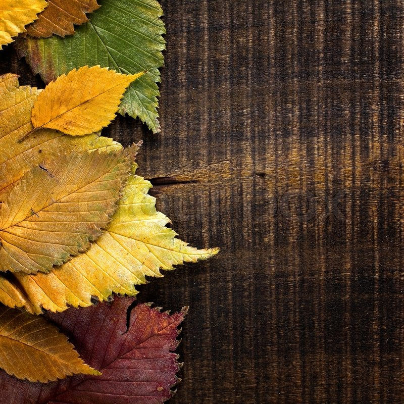 Autumn Background Leaves Border On Dark Wood Stock