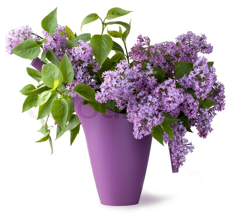 Bouquet of lilac flower | Stock Photo | Colourbox
