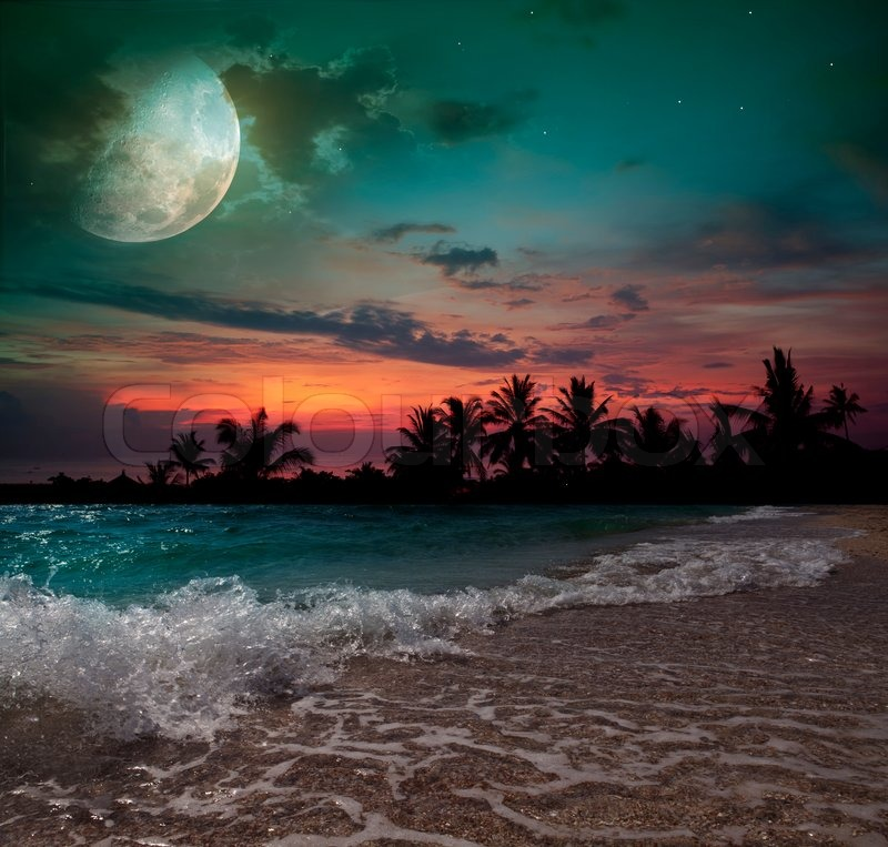 Moon, Ocean And Palm Trees