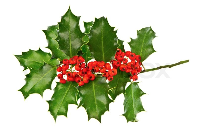 Christmas decoration holly with red berries | Stock Photo | Colourbox
