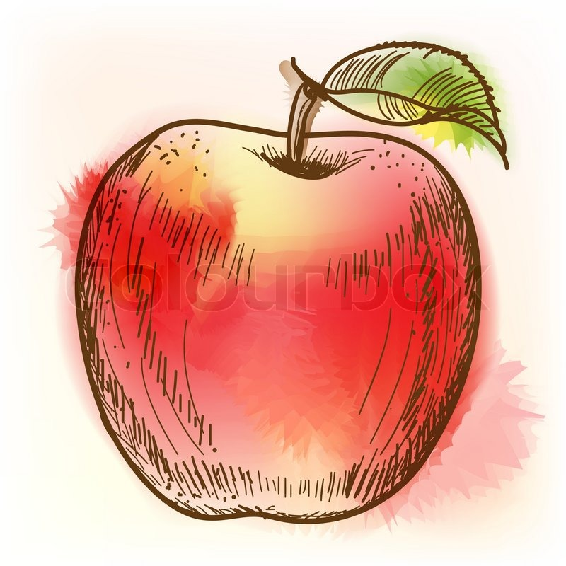 Displaying (16) Gallery Images For Red Apple Drawing...