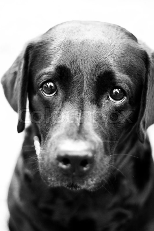 Stock image of young dog with sad puppy eyes in black and white