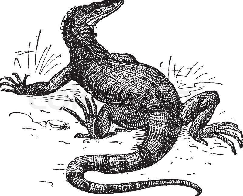 Monitor Lizard Vintage Engraved Illustration Dictionary Of Words And Things Larive And Fleury 1895 Vector 4873107 furthermore Vanilla Pod Flower Graphic Black White Isolated Sketch Illustration Vector Gm623748622 109495453 together with Royalty Free Stock Photography Stylized Mouse Drawing Image20614267 as well Coloring Pages Marine Wild Animals Little Cute Baby Dolphin Vector 22863368 besides Vektor Papierflieger Reisen Route Symbol Vektor Illustration Von Hand Gezeich e Gm887632650 246327036. on credit cartoon