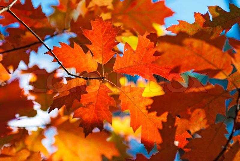 Red Oak Property Management