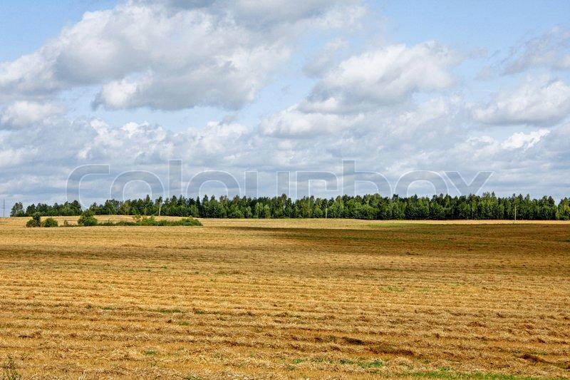 Field landscape, stock photo
