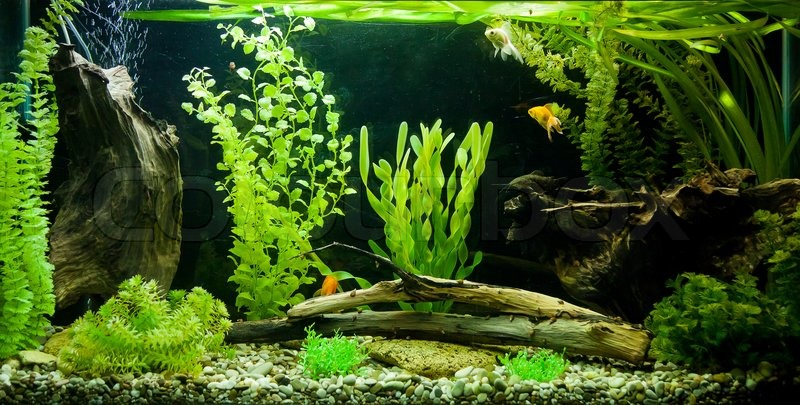Tropical Freshwater Aquarium Stock Photo Colourbox