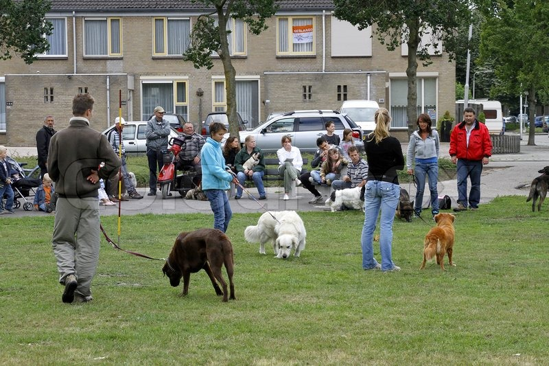 People with dogs on a lawn, stock photo