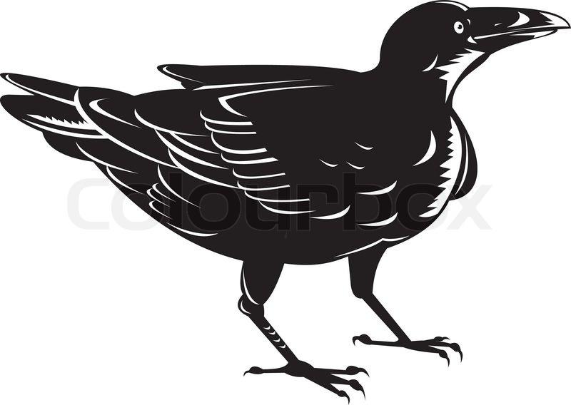 Black raven vintage