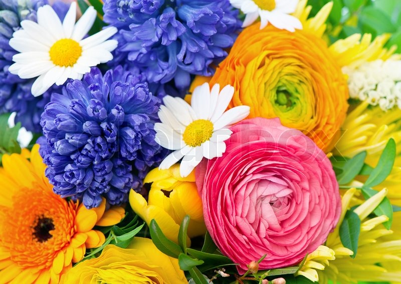 Beautiful Bouquet Of Colorful Flowers Stock Photo Colourbox