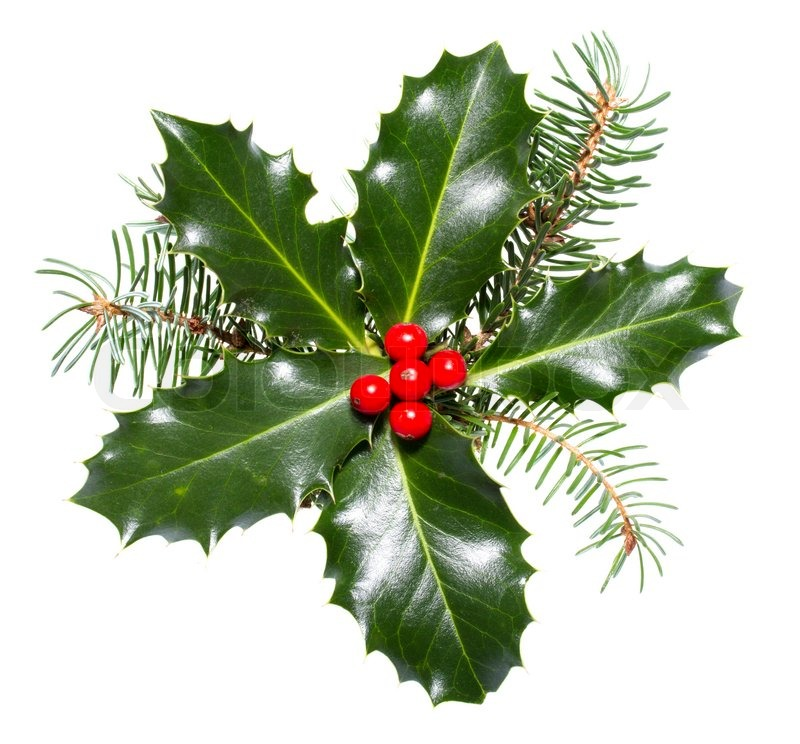 Galleries: Holly Berries And Leaves Coloring Pages , Christmas Holly ...