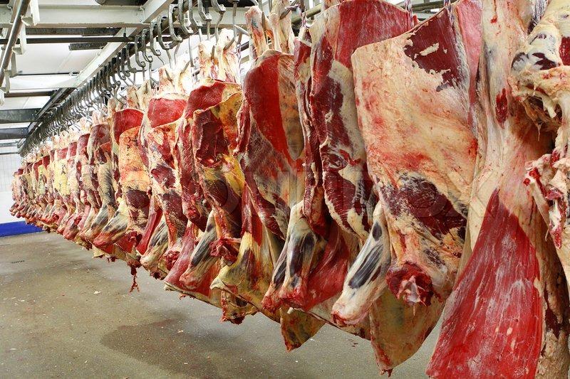 Fast Food Nation Animal Cruelty