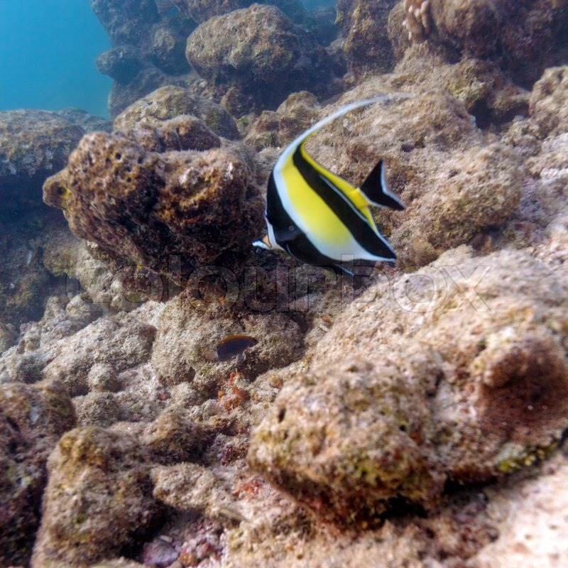 Coral reef fish yellow - photo#26