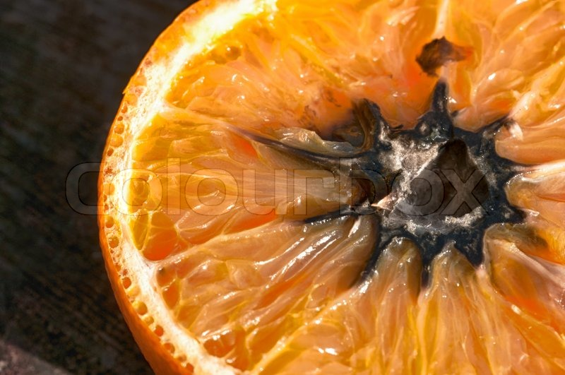 Rotten Orange With Mold Hdr Image Stock Photo Colourbox