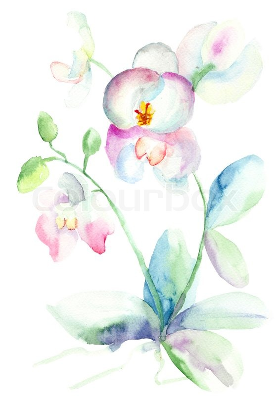 Beautiful orchid watercolor illustration stock photo colourbox - Dessin d orchidee ...