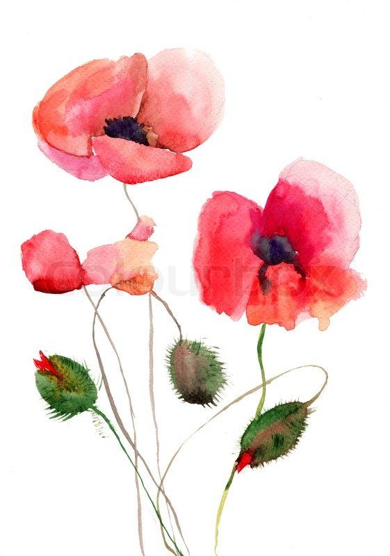 Stylized poppy flowers illustration stock photo colourbox mightylinksfo