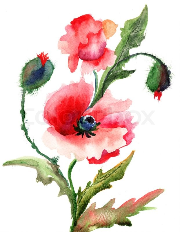 Beautiful Poppy flowers, Watercolor painting | Stock Photo ...