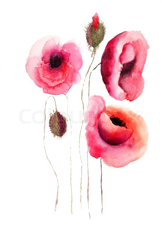 Poppy flowers watercolor illustration stock photo colourbox poppy flowers watercolor illustration stock photo mightylinksfo