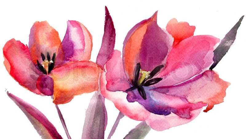 tulips flowers watercolor painting stock photo colourbox