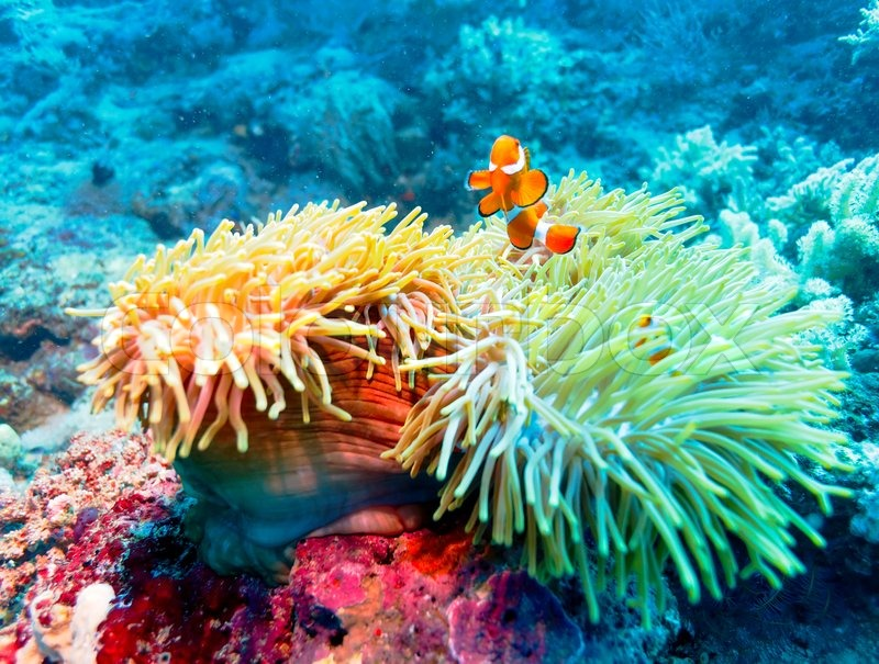 Tropical fish near colorful coral reef stock photo for Reef tropical fish
