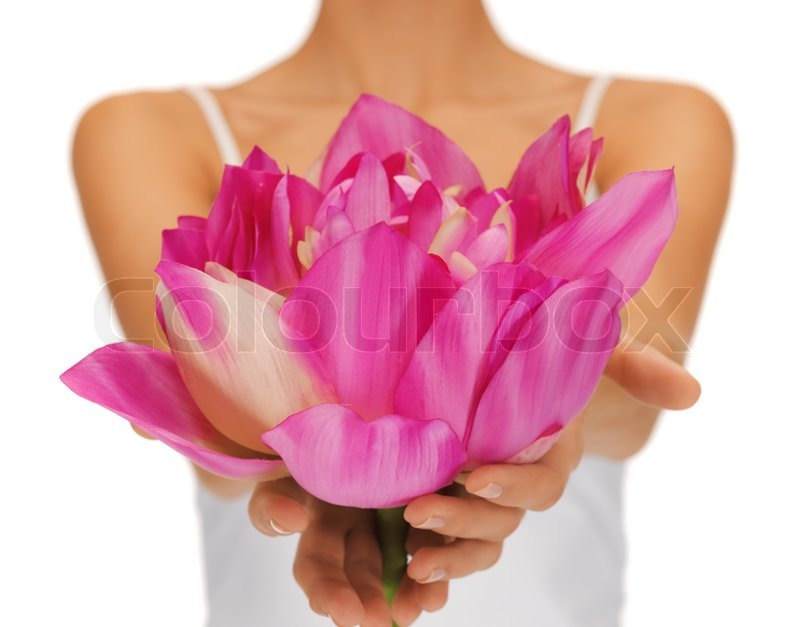 Woman Hands Holding Lotus Flower Stock Image Colourbox