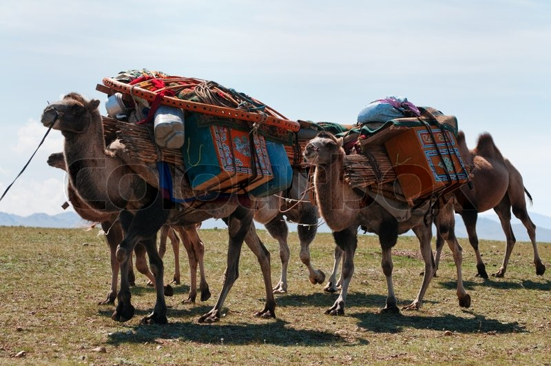 Caravan of camels in Mongolia | Stock Photo | Colourbox