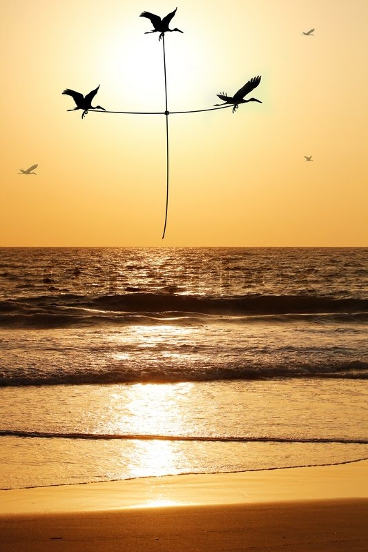 Beautiful Amp Heavenly Seaside In The Evening With Birds